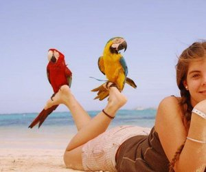 nature and parrot image