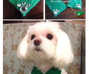 diy, Dog Collar, and pets image