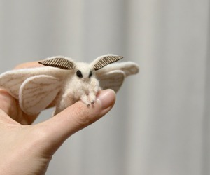 moth, animal, and quote image