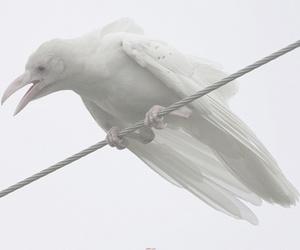 bird, white, and albino image
