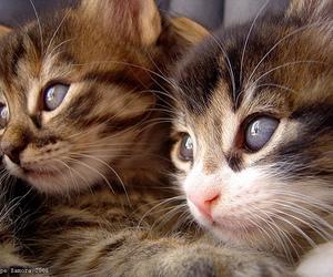 cats, Gatos, and bestofcats image