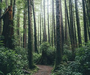 adventure, trip, and forest image