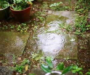 rain, garden, and green image