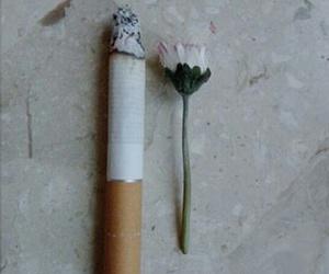 daisy, margherita, and sigaretta image
