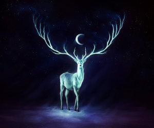 deer, moon, and night image