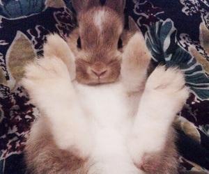 bunny, rabbit, and feet image