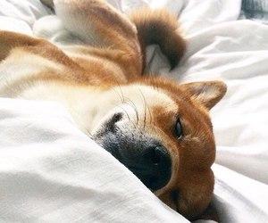 animal, color, and dog image