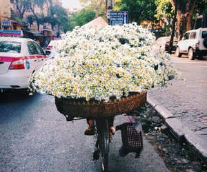 flowers, white, and daisy image