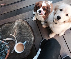 alternative, dogs, and coffee image