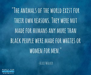 activist, animals, and quotes image