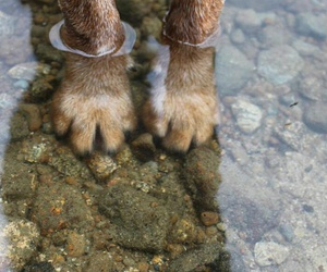 dog, water, and paws image