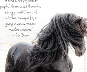 horse, strong, and beautiful image