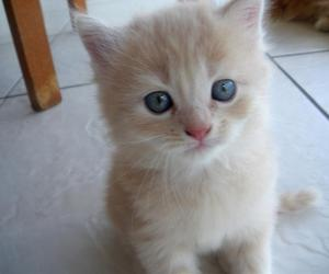baby, blue eye, and cat image