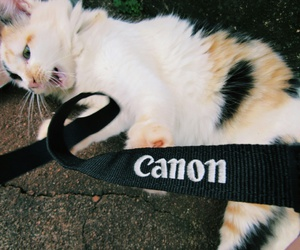 camera, canon, and cat image