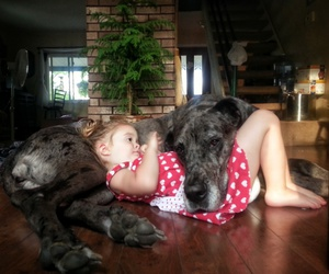 dog, baby, and child image