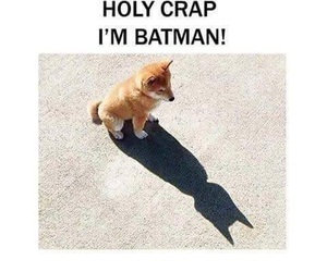 animals, batman, and funny image