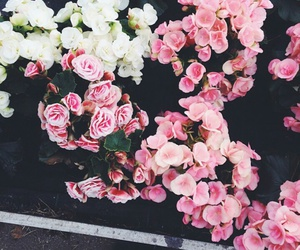 flowers, spring, and vsco image
