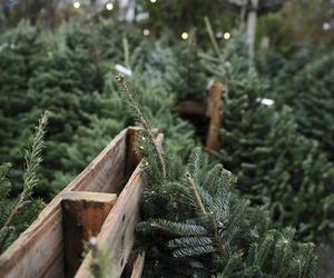 christmas, trees, and wallpaper image