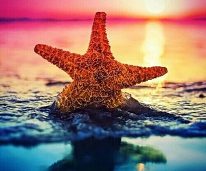 sea, star, and summer image