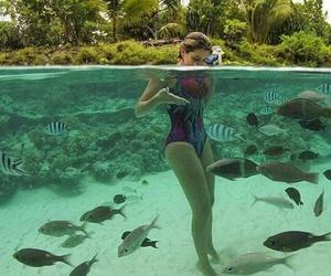 fish and summer image