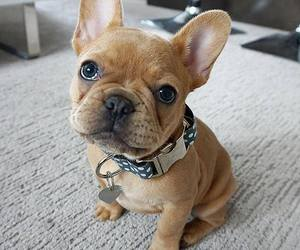 adorable, lovely, and puppie image