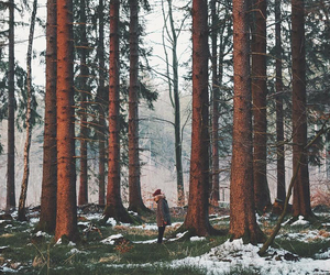 aesthetic, woods, and forest image