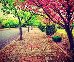 tree, beautiful, and photography image