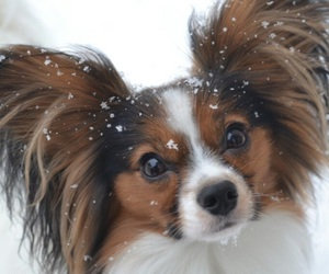 adorable, dog, and dogs image