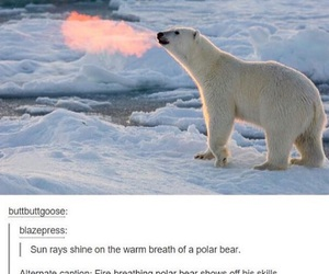 funny, bear, and fire image