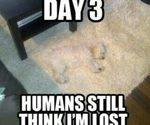 dog, funny, and lost image