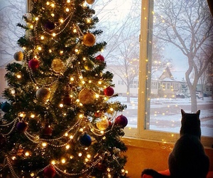 beautiful, cat, and lights image