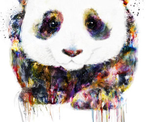 panda, art, and animal image