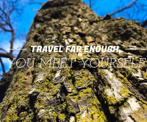 forest, live, and travel image