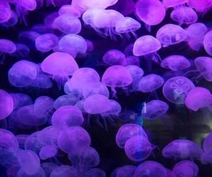 purple, jellyfish, and aesthetic image