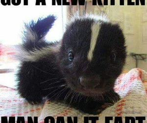 funny, kitten, and lol image