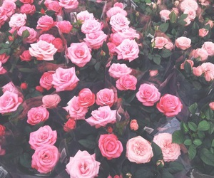pink and rose image