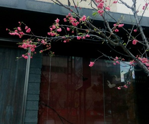 cherry tree, japanese restaurant, and street sights image