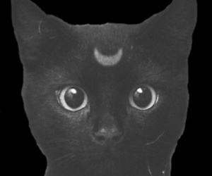 black, overlay, and cat image