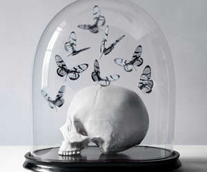 skull, butterfly, and glass image
