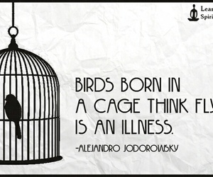 birds, cage, and caged image