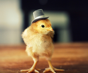 cute, Chick, and hat image