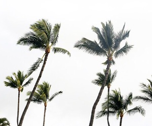 summer, white, and palm trees image