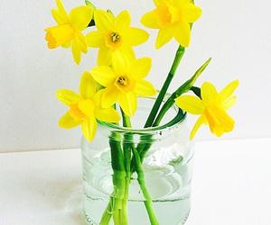 daffodil, daffodils, and decor image