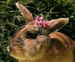 animals, fluffy, and plants image