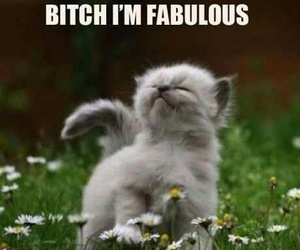 cat, cute, and fabulous image