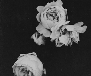 rosas and blancoynegro image