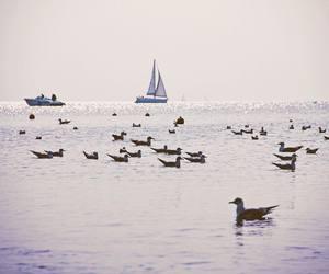 beautiful, landscape, and sailing image