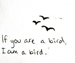 bird, quotes, and the notebook image