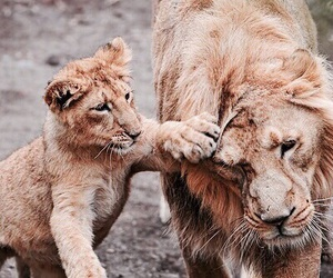 animals, baby, and mom image