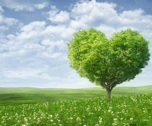 tree, heart, and nature image
